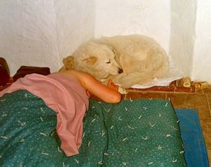 Aura was a large dog who enjoyed snuggling into small spaces and cuddling up with us. She isn't really on Dido's head...