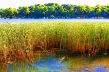 brunnsviken-reeds-water-boats-and-trees