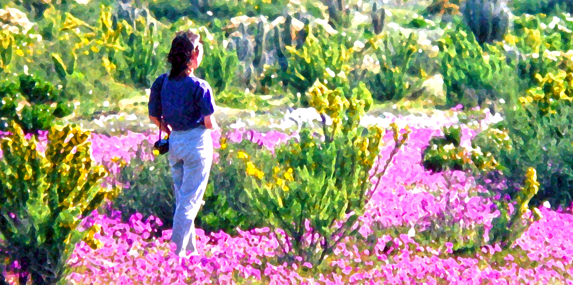 Friend Marvelling at the Atacama in Bloom (Chile)