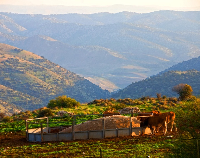 Golan - Above the Yabock Valley