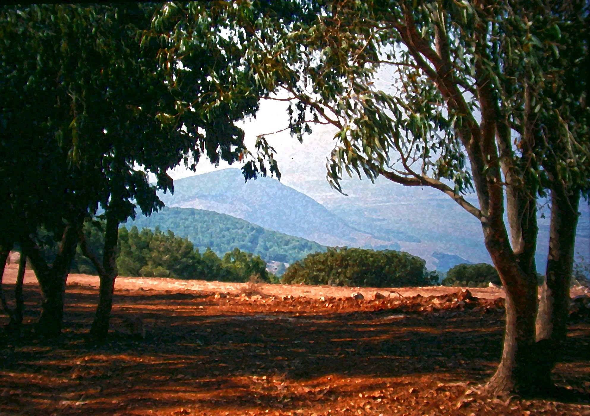 Gilboa trees