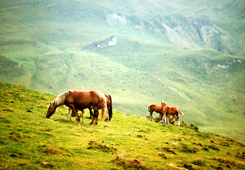 2 Pyrenean Ponies