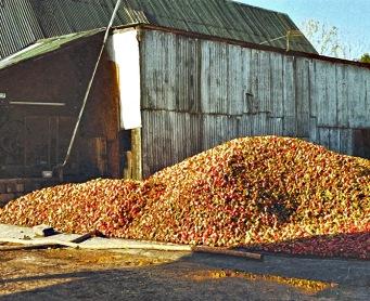 Burrow Hill - Apple Heap