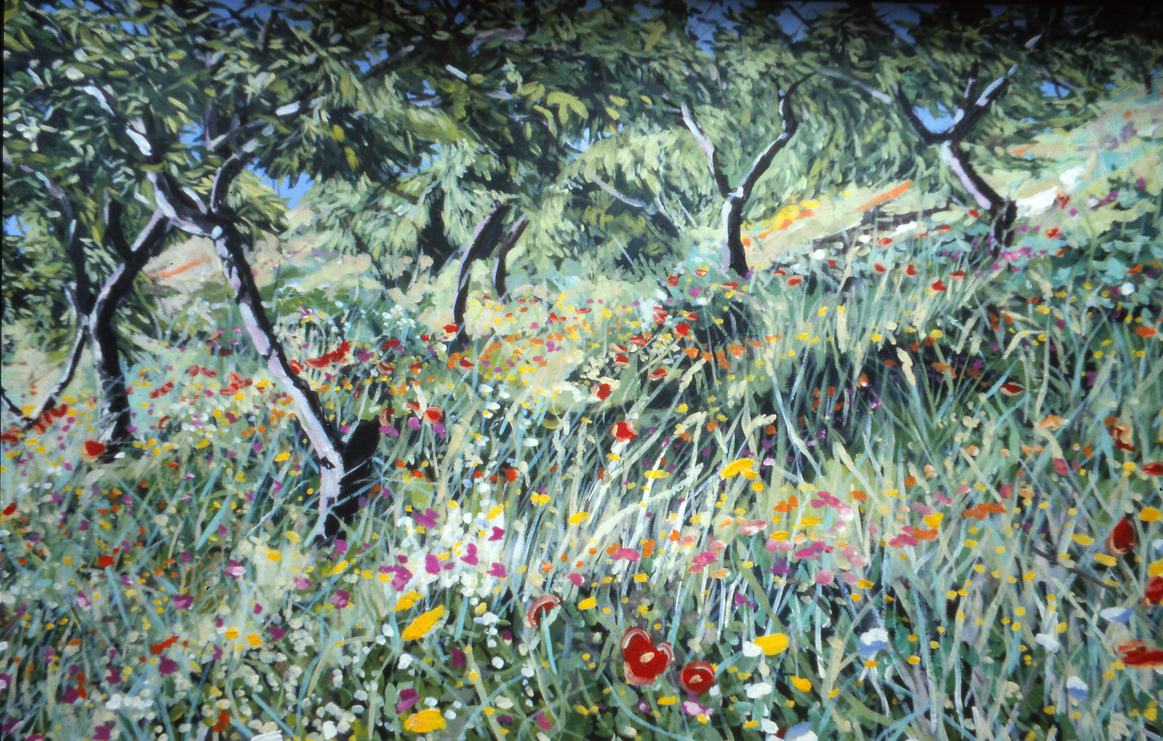 Almond Trees and Grasses.jpg